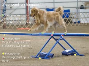 Hond over een Wipwap