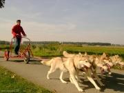 Krachten Hondenslee