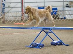 VR Hond op Wipwap